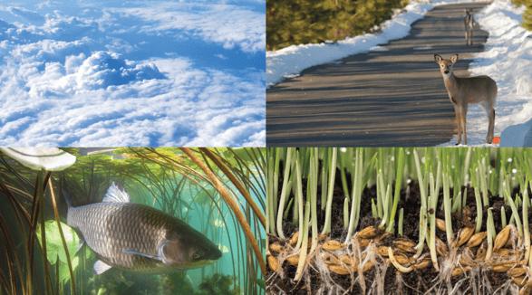 Environmentally safe vs public safety-02