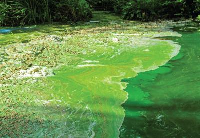 Harmful algae bloom