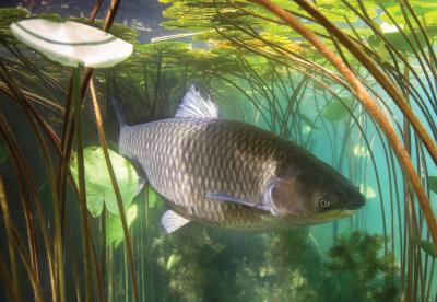 Fish swimming in a stream